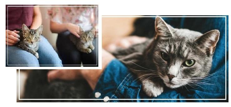 Kurs felinoterapii online